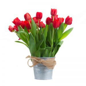 Tulipanes en balde